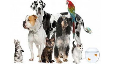 San Diego Pet Stain/Odor Removal